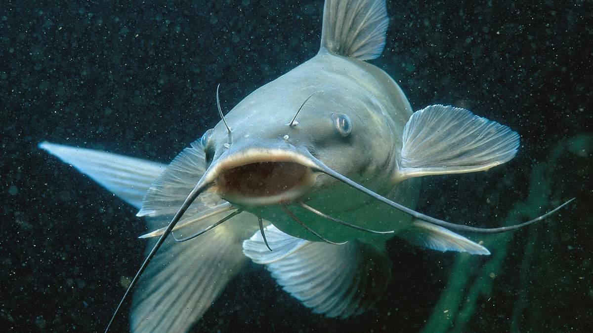 Музей рыб