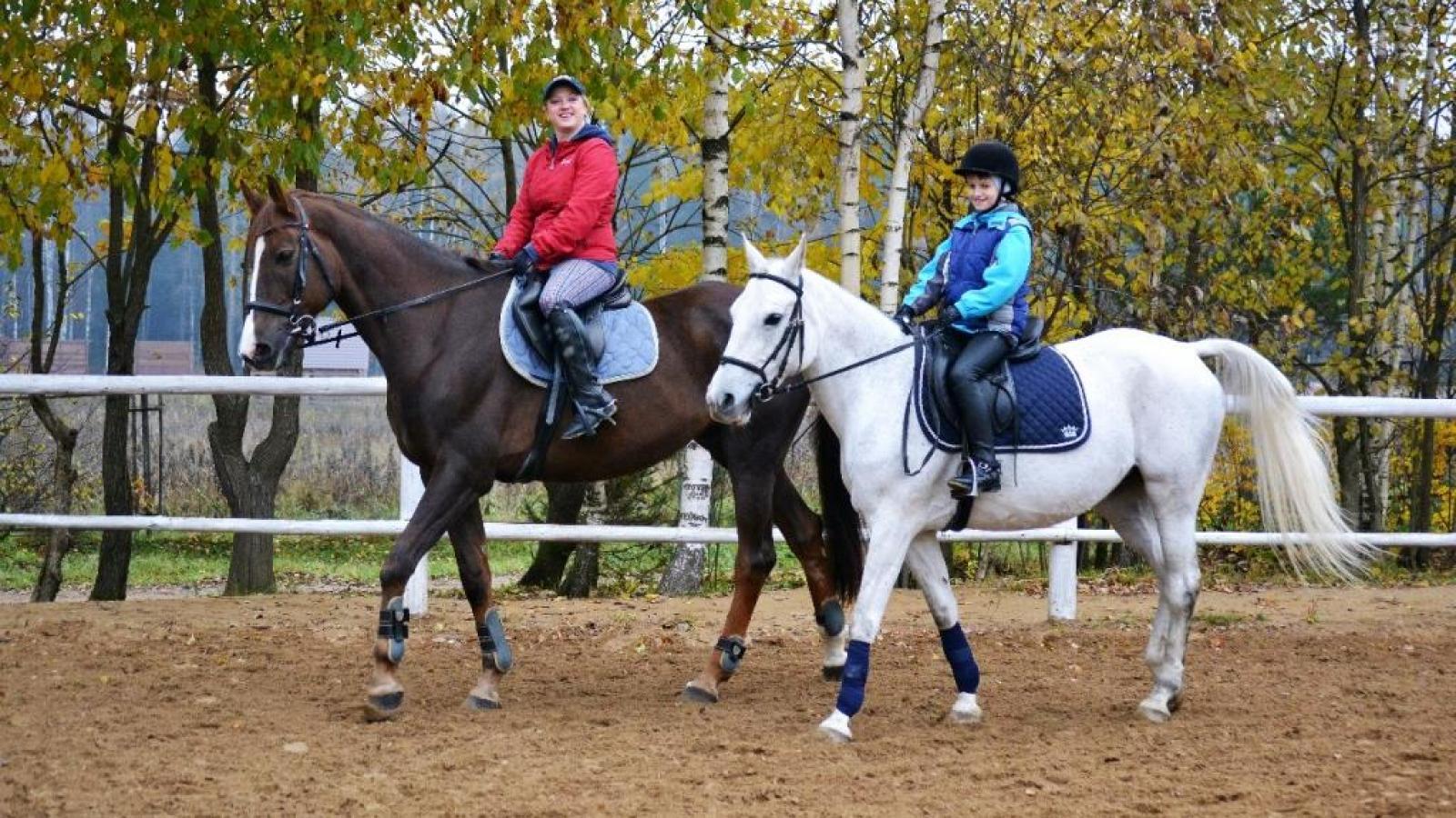 В мире лошадей